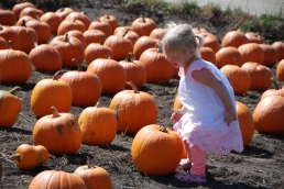 Looking for the perfect pumpkin.