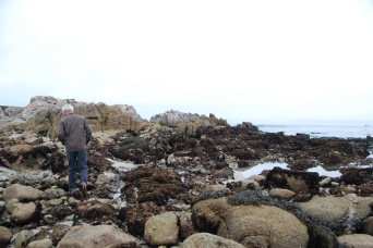 Checking out the tidal pools at Asilomar State Marine Reserve.